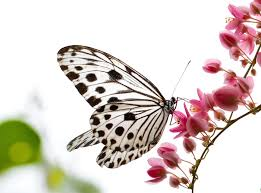 Butterfly breathing to boost fertility